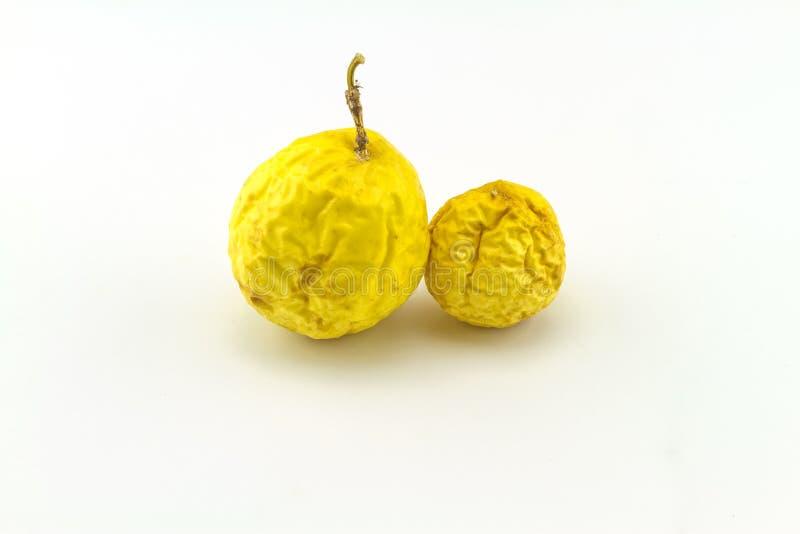 Chiuda su giallo asciutto della passiflora di Passionfruit edulis su bianco fotografia stock libera da diritti