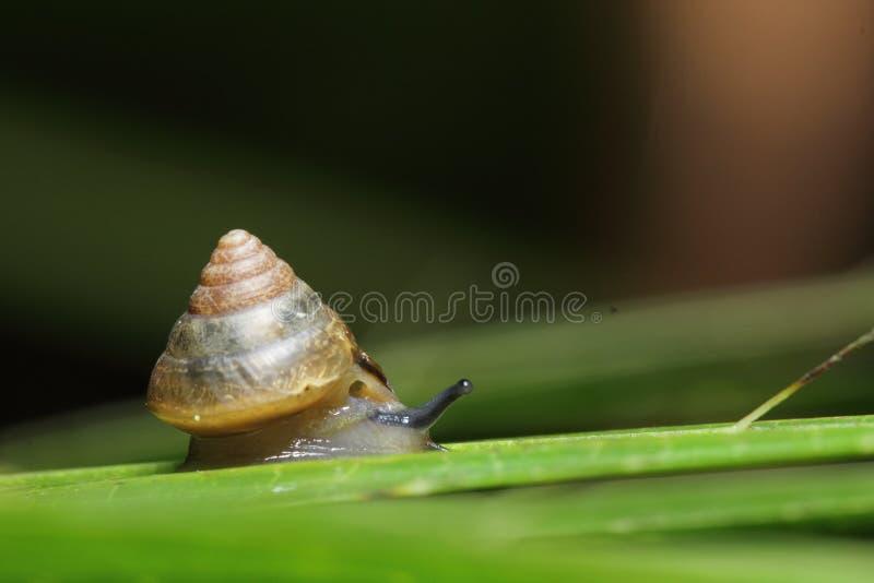 Chiuda su lento fotografia stock libera da diritti