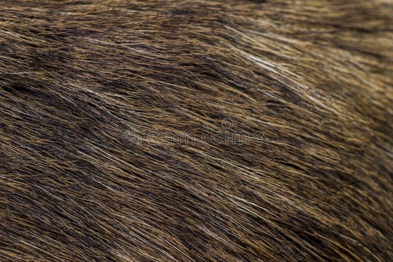 Chiuda su su pelliccia marrone fotografie stock libere da diritti