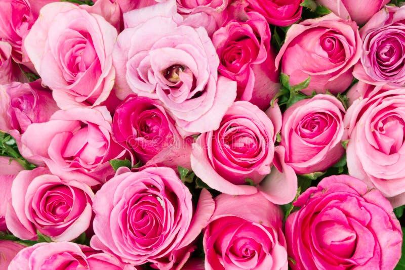 chiuda su rosa-chiaro dolce sul fondo astratto rosa di illuminazione fotografia stock