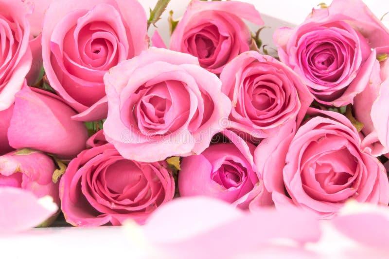 chiuda su rosa-chiaro dolce sul fondo astratto rosa di illuminazione immagini stock