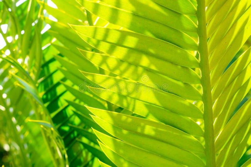 Chiuda su sotto le belle foglie attuali verdi con la luce del giorno, svasi spazio di effetto della luce e della copia uso per il fotografia stock