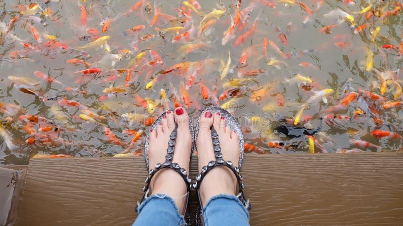 Chiuda su sui piedi del ` s della ragazza che indossano i sandali d'argento ed i chiodi rossi con nuoto operato della carpa nei p immagine stock