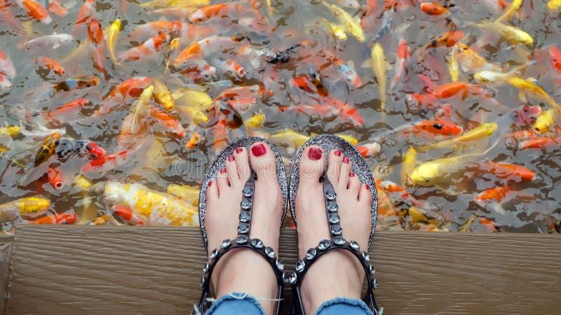 Chiuda su sui piedi del ` s della ragazza che indossano i sandali d'argento ed i chiodi rossi con nuoto operato della carpa nei p immagini stock libere da diritti