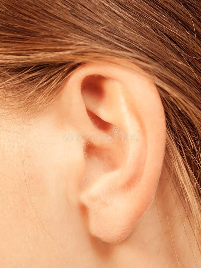 Chiuda su sull'orecchio femminile immagini stock
