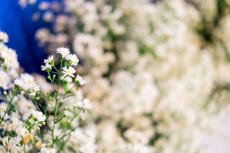 Chiuda su un su un piccoli fiore bianco e selettivo messi a fuoco immagine stock libera da diritti