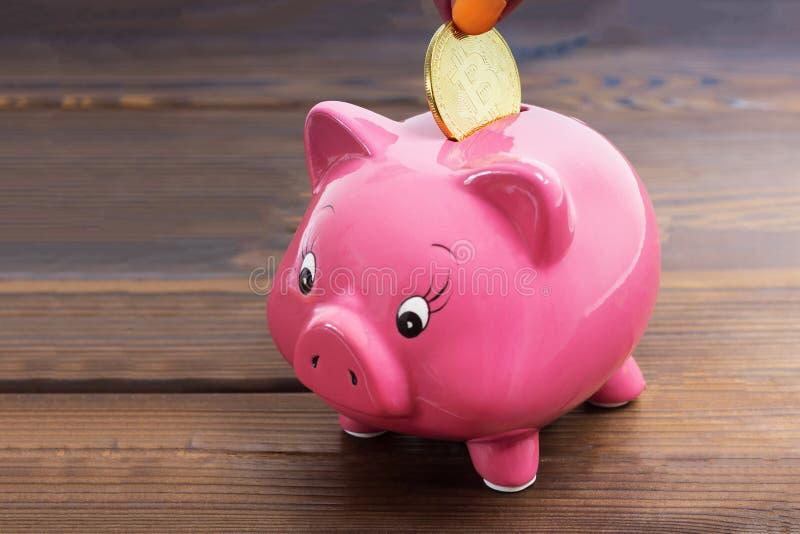 Chiuda su su una mano che mette il bitcoin dorato dentro al salvadanaio del maiale sul fondo di legno scuro Concetto di investime fotografie stock libere da diritti