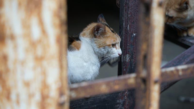 Chiuda su verso il gatto fotografia stock libera da diritti