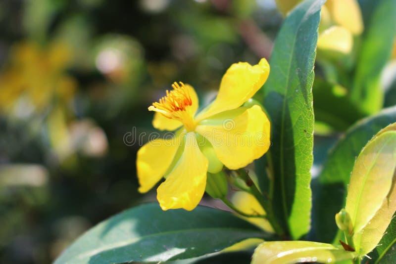 Chiuda sui bei colori gialli di piccoli fiori in parco naturale sul fondo della sfuocatura fotografia stock