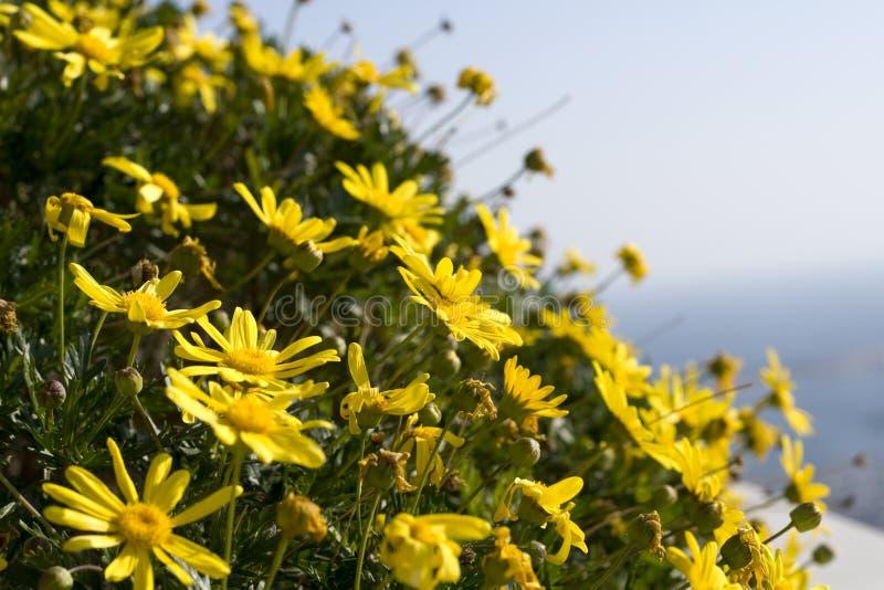 Chiuda sui fiori gialli fotografie stock libere da diritti