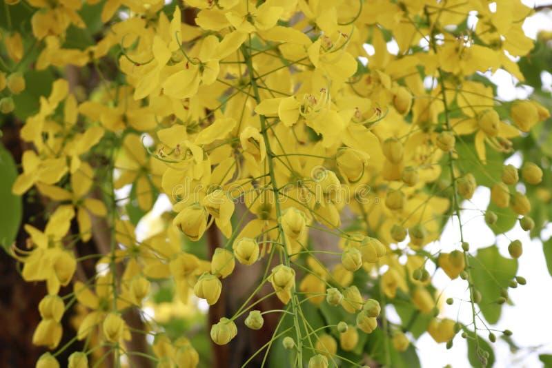 Chiuda sui fiori gialli immagini stock libere da diritti