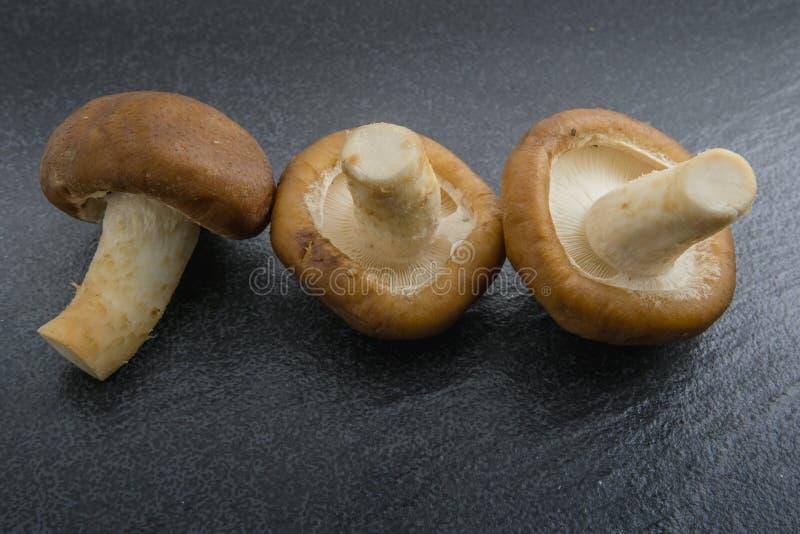 Chiuda sui funghi di shiitake crudi su fondo nero immagini stock libere da diritti