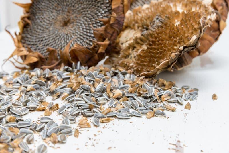 Chiuda sui semi di girasole raccolti fotografia stock