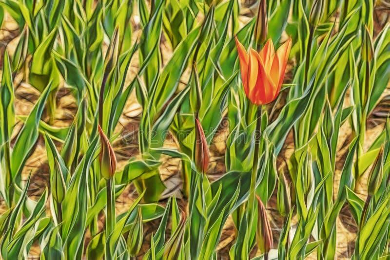 Chiuda sui tulipani in natura fotografie stock libere da diritti