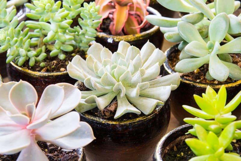 Chiuda sul cactus immagine stock