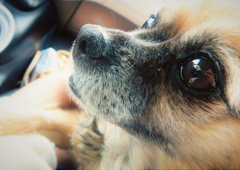 Chiuda sul cane fotografia stock