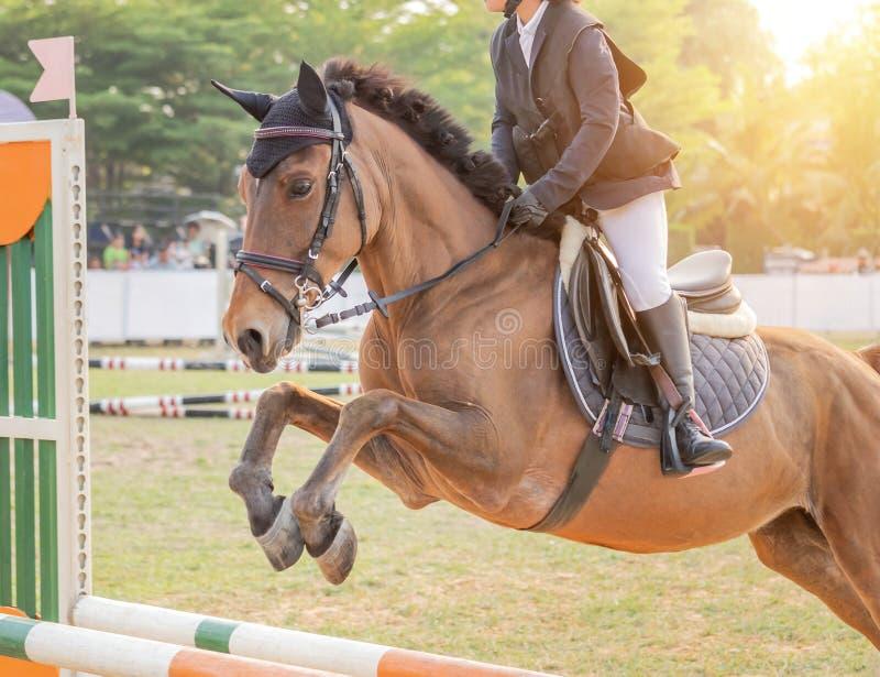 Chiuda sul cavallo equestre del cavaliere di azione che salta sopra l'ostacolo della transenna durante la concorrenza della prova fotografia stock libera da diritti
