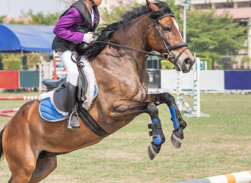 Chiuda sul cavallo equestre del cavaliere di azione che salta sopra l'ostacolo della transenna durante la concorrenza della prova immagine stock
