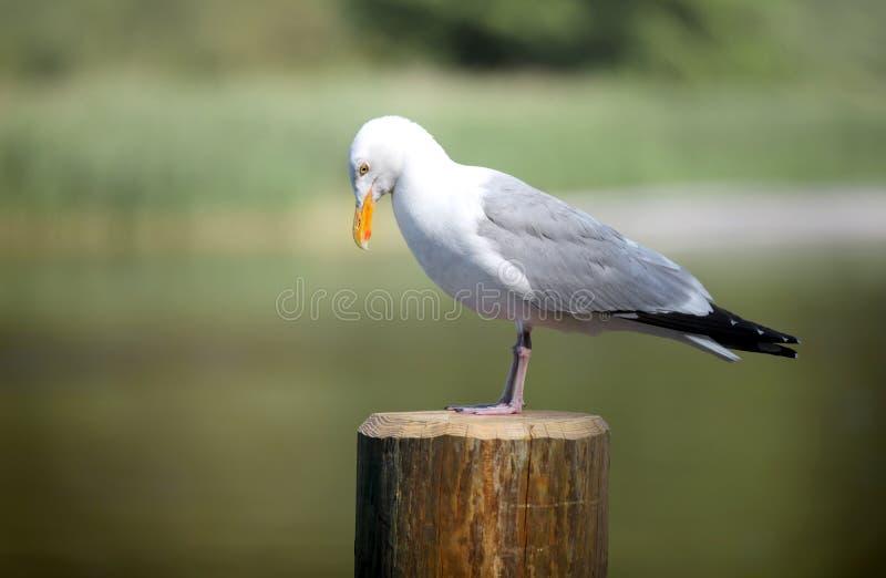 Chiuda sul colpo dell'uccello della procellaria fotografia stock