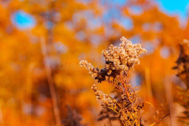 Chiuda sul colpo di un piano lungo una traccia di escursione vicino a Grand Rapids Michigan fotografia stock libera da diritti