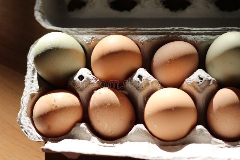 Chiuda sul colpo sopraelevato delle uova gialle e bianche in un cartone dell'uovo immagine stock libera da diritti