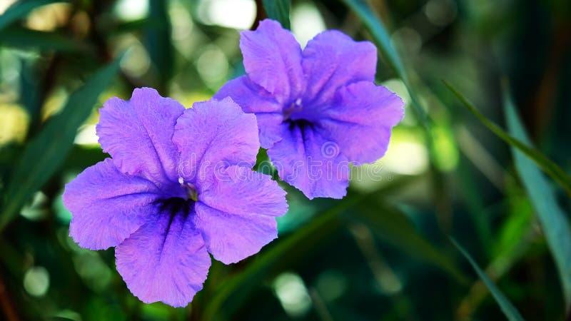 Download Chiuda Sul Fiore Porpora In Giardino Fotografia Stock - Immagine di fine, appendere: 55359966