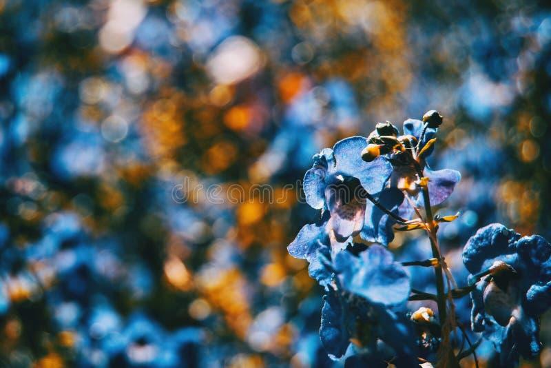 Chiuda sul fondo blu di colore del piccolo fiore variopinto fotografie stock libere da diritti
