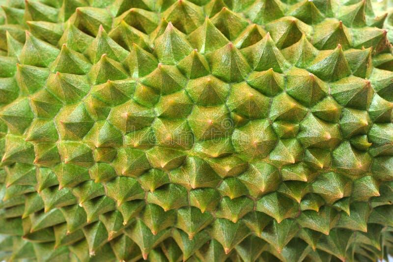 Durian immagini stock libere da diritti
