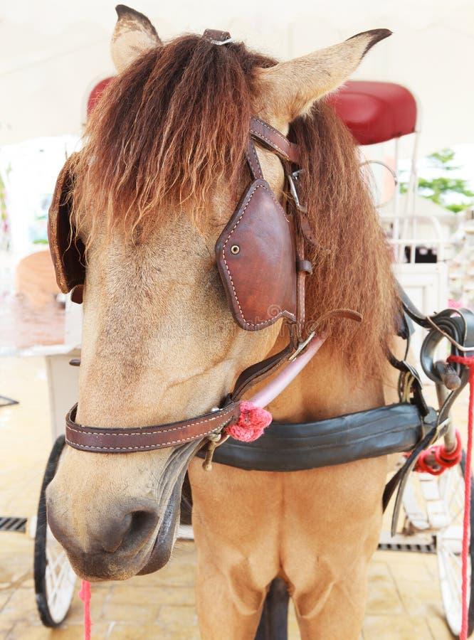 Chiuda sul fronte del cavallo di lavoro con il percorso cieco degli occhi fotografia stock