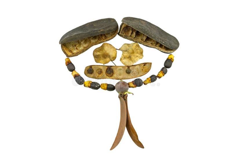 Chiuda sul fronte sorridente della pila dell'albero dei semi come ritocco umano di forma nella nuova speranza del concetto della  fotografia stock