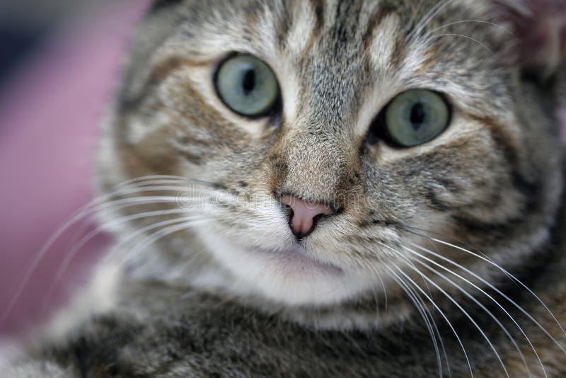 Chiuda sul gatto fotografie stock libere da diritti