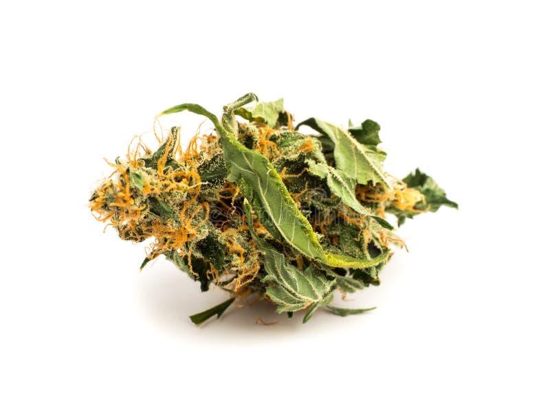 Chiuda sul germoglio medico della marijuana isolato su fondo bianco fotografia stock