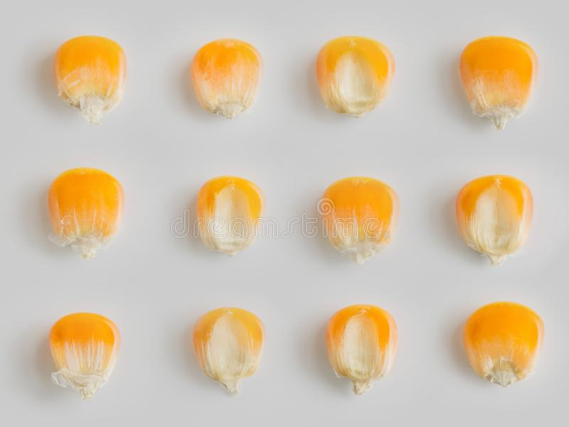 Chiuda sul modello asciutto dei semi del cereale di giallo di vista superiore su fondo bianco fotografia stock