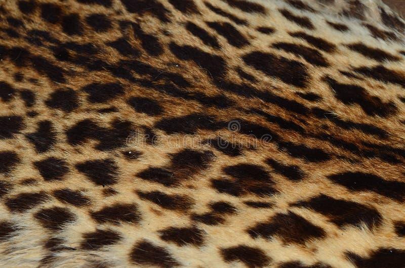Chiuda sul modello della pelle del leopardo fotografia stock libera da diritti