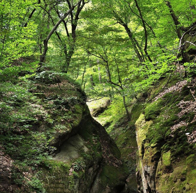 Chiuda sul paesaggio della natura dell'ecologia fotografia stock