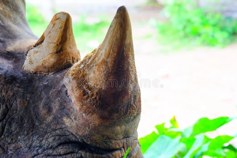 Chiuda sul rinoceronte in zoo Tailandia fotografie stock