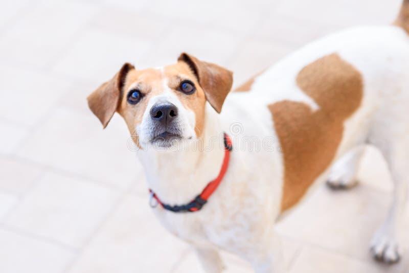 Chiuda sul ritratto del cane fotografie stock