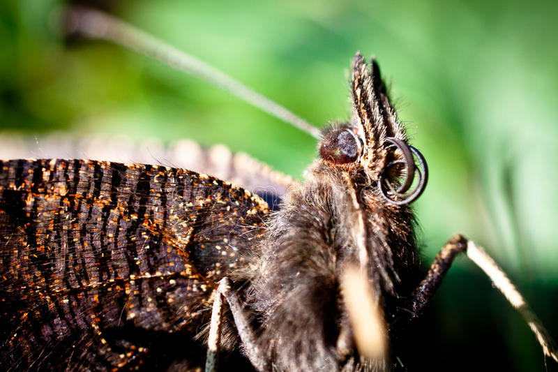 Chiuda sul ritratto della farfalla di fine dell'estate immagine stock libera da diritti