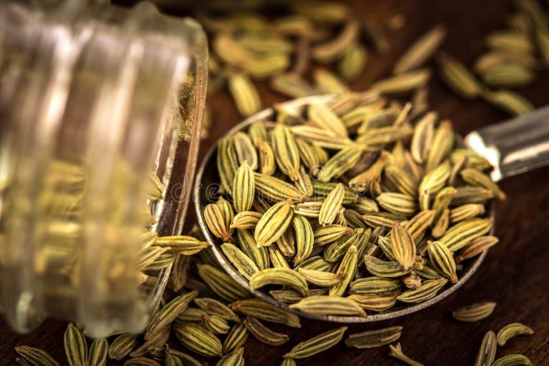 chiuda sul seme di finocchio in cucchiaio sulla tavola di legno marrone immagini stock libere da diritti