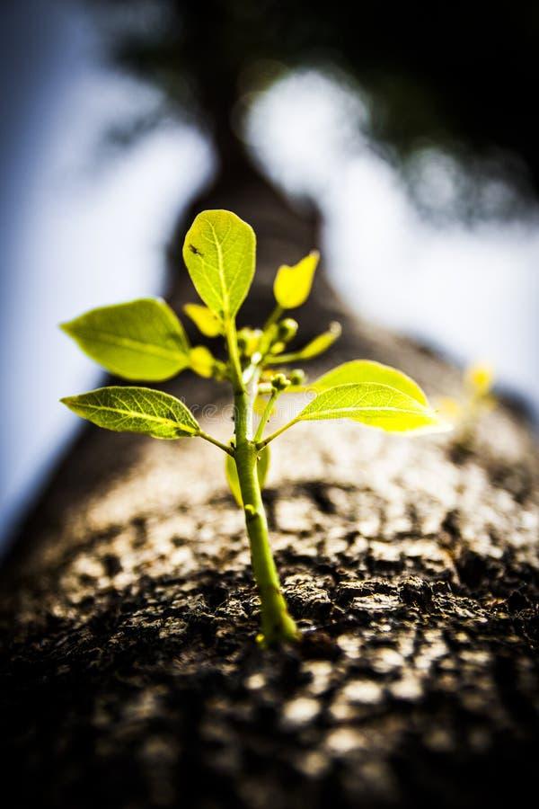 Chiuda sull'albero che germoglia il nuovo ramo fotografia stock