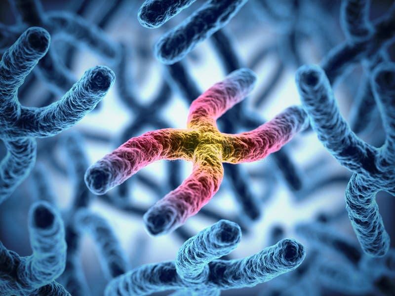 Chiuda sull'illustrazione della rappresentazione del mazzo 3d del cromosoma royalty illustrazione gratis