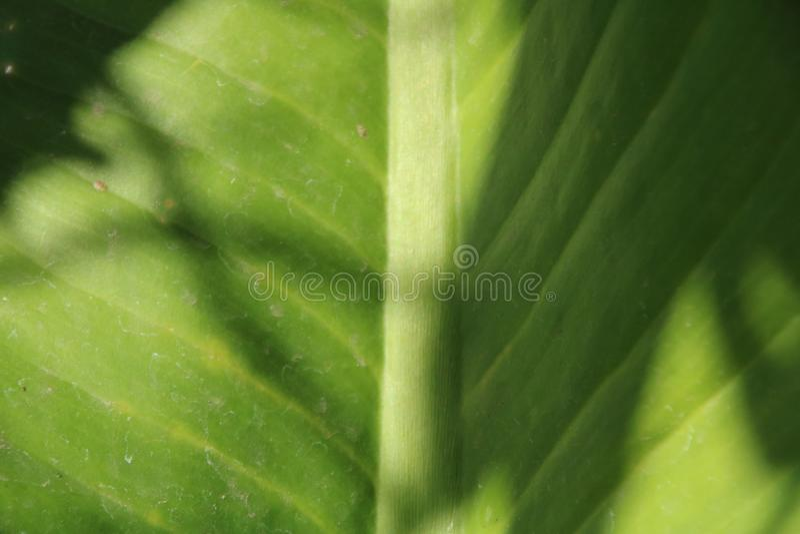 Chiuda sull'immagine del foglio verde fotografia stock