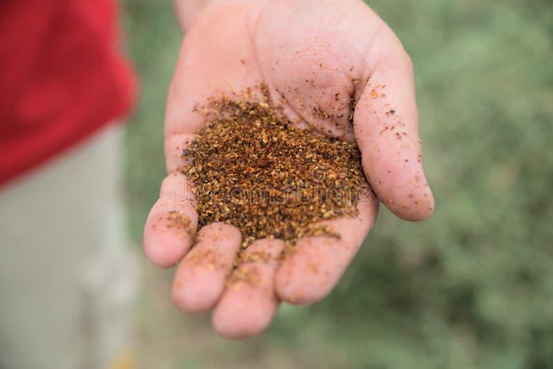 Chiuda sull'immagine delle mani che tengono l'alimentazione animale ad un'iarda di riserva immagine stock