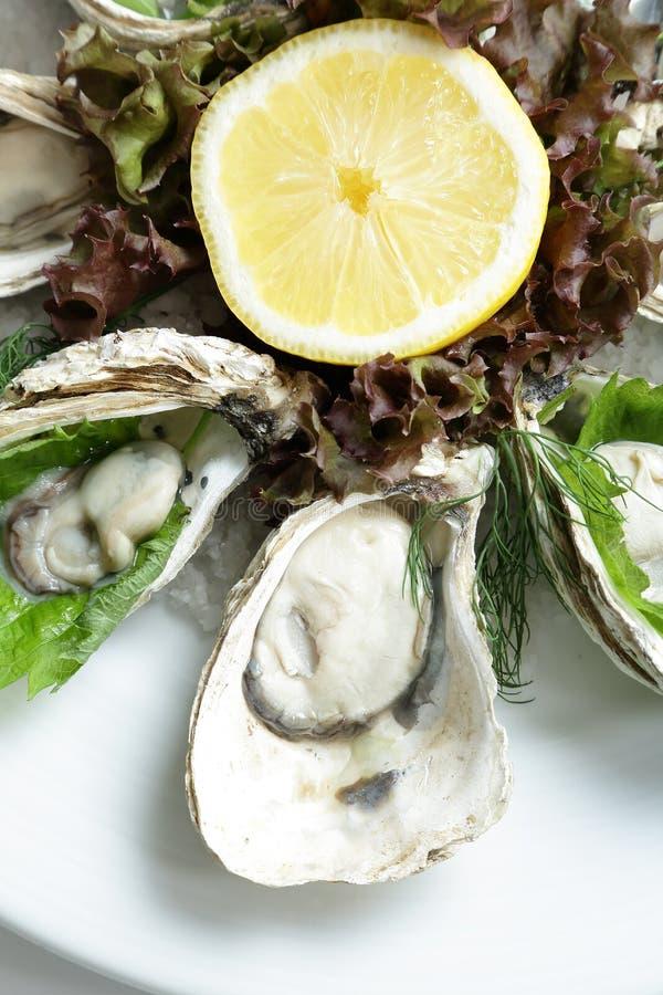 Chiuda sull'ostrica fresca immagine stock