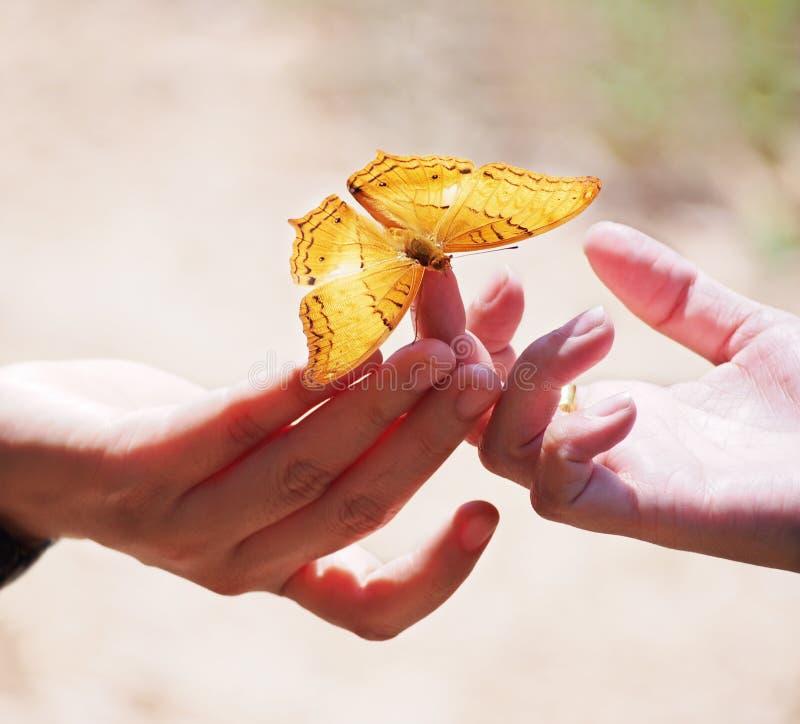 Chiuda sulla bella farfalla sul dito della donna immagini stock libere da diritti
