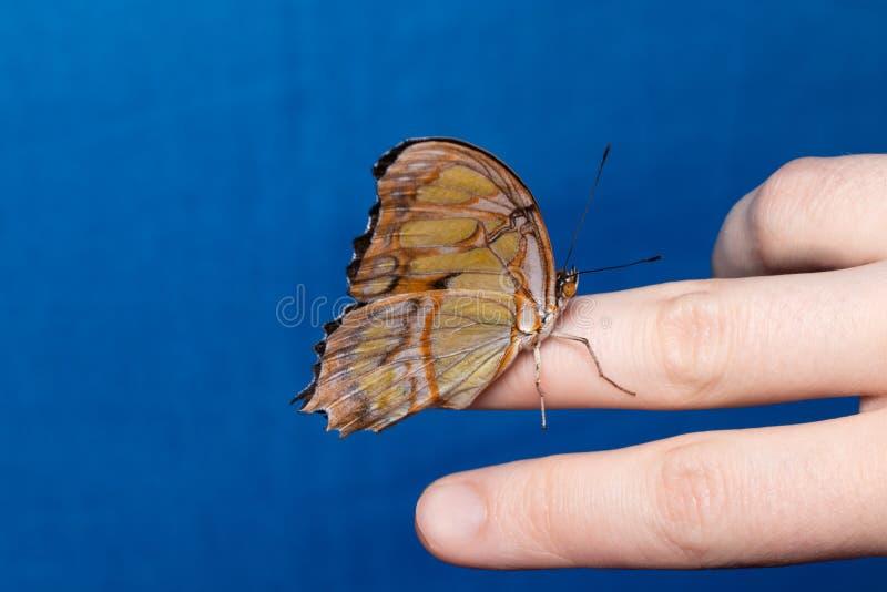 Chiuda sulla farfalla sulla mano della donna Bellezza della natura fotografia stock libera da diritti