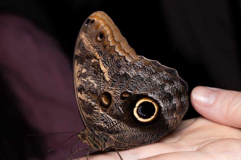 Chiuda sulla farfalla sulla mano della donna Bellezza della natura fotografie stock libere da diritti