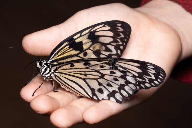Chiuda sulla farfalla sulla mano della donna Bellezza della natura immagine stock libera da diritti
