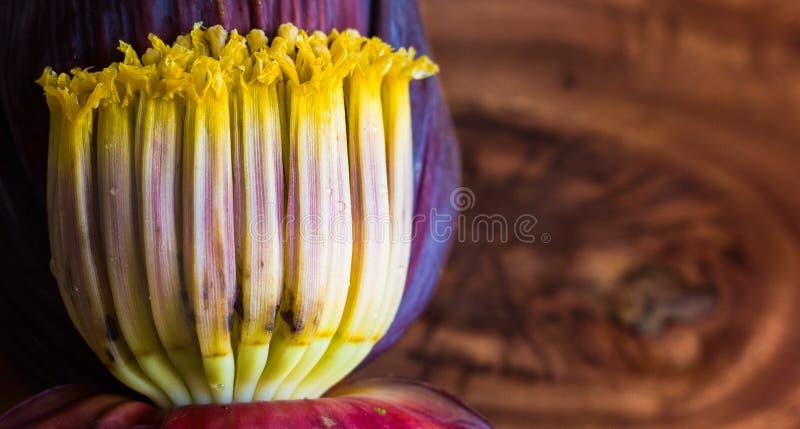 Chiuda sulla macro della moca del fiore della banana, fiori della banana non matura nel fondo di legno con lo spazio della copia  immagini stock