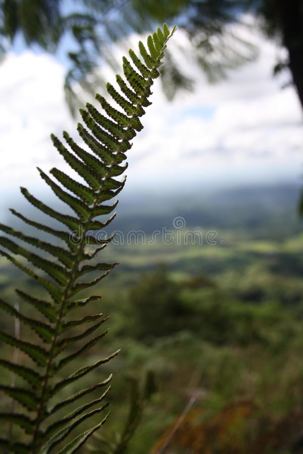 Chiuda sulla pianta verde con il lotto delle foglie immagini stock libere da diritti